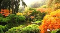 美国苏州园林 中国名贵石木尽显异国风情